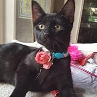 Adopt A Pet :: Whoopie - Frisco, TX