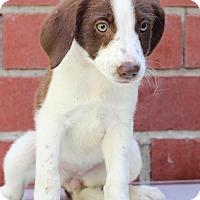 Adopt A Pet :: Gina - Waldorf, MD