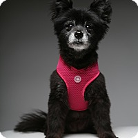 Adopt A Pet :: Kiki - Los Angeles, CA