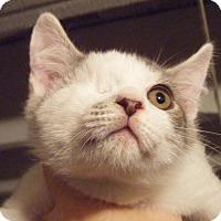 Adopt A Pet :: Duke - Kensington, MD