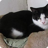 Adopt A Pet :: ROMEO - detroit, MI