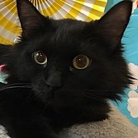Adopt A Pet :: Pricilla - Mesa, AZ