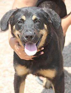 Shepherd (Unknown Type) Mix Dog for adoption in Mahwah, New Jersey - Albany