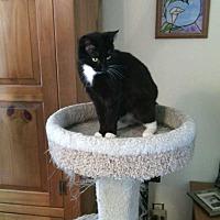 Adopt A Pet :: Pixie - Fayetteville, TN