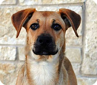 German Shepherd Dog Mix Dog for adoption in Weatherford, Texas - Missy