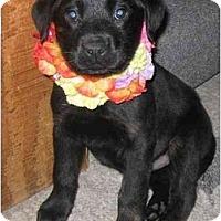 Adopt A Pet :: Amari - Chandler, IN