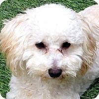 Adopt A Pet :: Opi - La Costa, CA