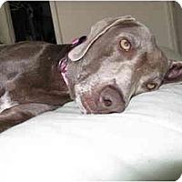 Adopt A Pet :: Daisy  **ADOPTED** - Eustis, FL