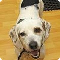 Adopt A Pet :: Scottie - Chesterfield, VA