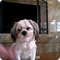 Adopt A Pet :: Wilson - Mount Kisco, NY