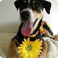 Adopt A Pet :: Fernie - Monteregie, QC