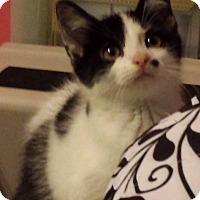 Adopt A Pet :: Onyx - Fayette City, PA