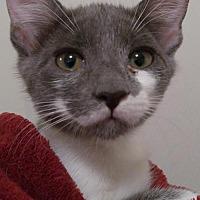 Adopt A Pet :: Gigi - Valrico, FL