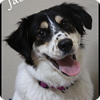Adopt A Pet :: Jasmine - Rockwall, TX