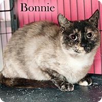 Adopt A Pet :: Bonnie - Shelton, WA
