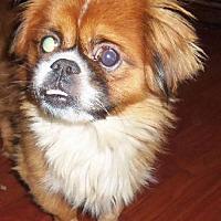 Adopt A Pet :: Arlo - Oakdale, TN