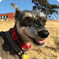 Adopt A Pet :: Anna - Sunnyvale, CA