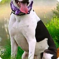 Adopt A Pet :: MIA - Ellaville, GA