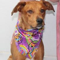 Adopt A Pet :: Katy - Robinson, IL