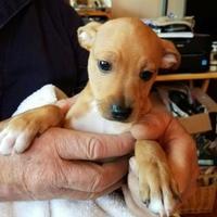 Adopt A Pet :: YOGI - Kiln, MS