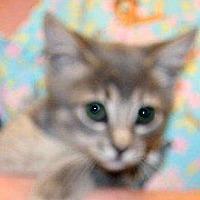 Adopt A Pet :: Cindy - Wildomar, CA