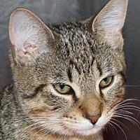Adopt A Pet :: 25604 Piper - Ellicott City, MD
