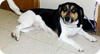 Beagle Mix Dog for adoption in Washington Court House, Ohio - Rosie