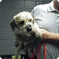 Adopt A Pet :: Howdy - Fort Scott, KS