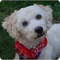 Adopt A Pet :: Kaitlyn - La Costa, CA
