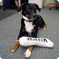 Adopt A Pet :: Carmen - Hamilton, ON