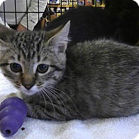 Adopt A Pet :: Zelda - St. Louis, MO