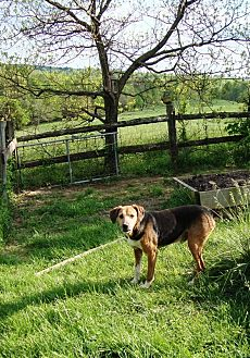 Hound (Unknown Type) Dog for adoption in Columbia, Kentucky - Slim