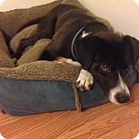 Adopt A Pet :: Ida Mae - Downers Grove, IL