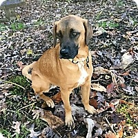 Adopt A Pet :: Blue - Blue Ridge, GA