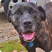 Adopt A Pet :: Georgina - Silver Spring, MD