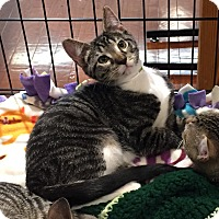 Adopt A Pet :: Buttons & Boots - Horsham, PA