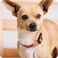 Adopt A Pet :: O'Reilly - Portland, OR