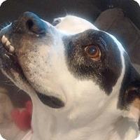 Adopt A Pet :: Helen - Ft. Lauderdale, FL