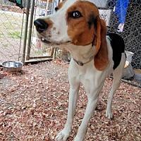 Adopt A Pet :: Della - Cleveland, OH