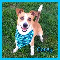 Adopt A Pet :: Corey - Jasper, IN