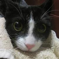 Adopt A Pet :: Phoenix - Wantagh, NY