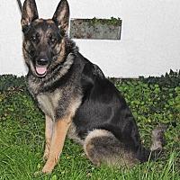 Adopt A Pet :: Lola A. - Sacramento, CA