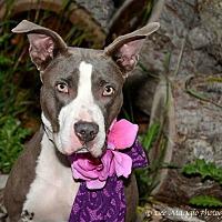 Adopt A Pet :: Skylar aka Lucy - Garden City, MI