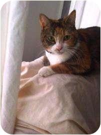Domestic Mediumhair Cat for adoption in Jackson, Michigan - Gem