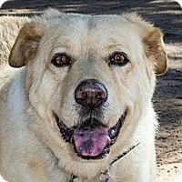 Adopt A Pet :: FARGO - Phoenix, AZ