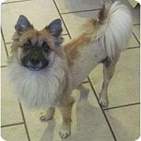 Adopt A Pet :: Reba - Plainfield, CT
