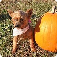 Adopt A Pet :: Diva - stella, NC