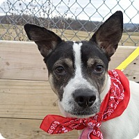 Adopt A Pet :: Quincy - Kingsport, TN