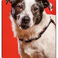 Adopt A Pet :: Sunday DRD graduate - Owensboro, KY