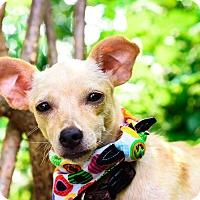 Adopt A Pet :: Willow - Calgary, AB